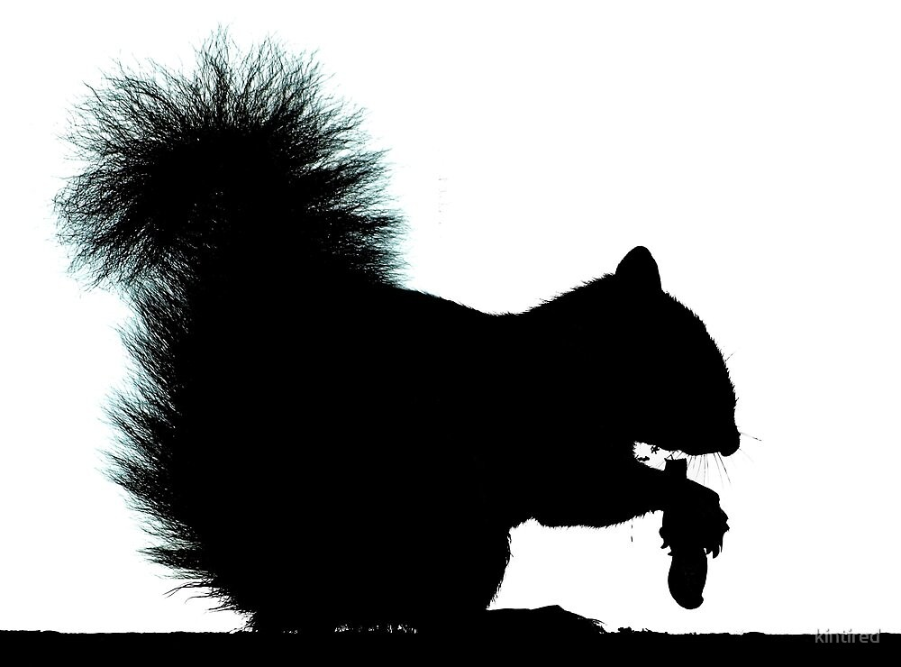 Fluffy Tailed Squirrel Silhouette  by kintired