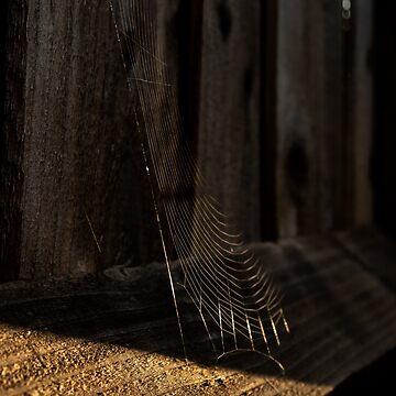 Autumn Web by widdy170