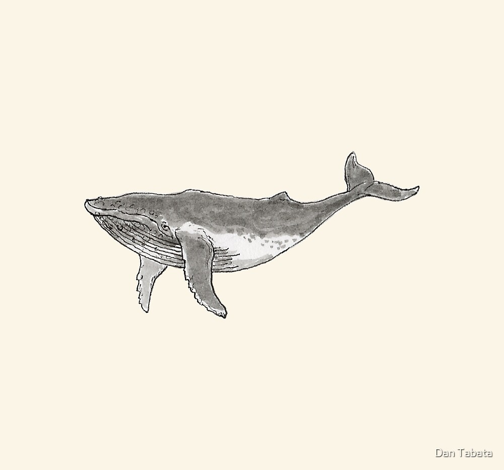 Humpback Whale by Dan Tabata