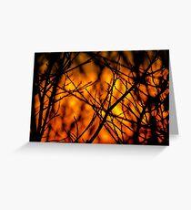 Illuminating Orange Sunset Greeting Card
