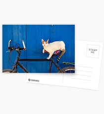 Moroccan Cat on a Bicycle Postcards