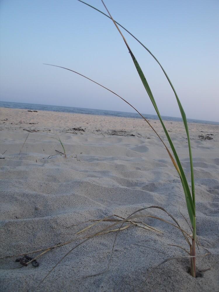 Dune Grass on the Beach by TJ Trubert