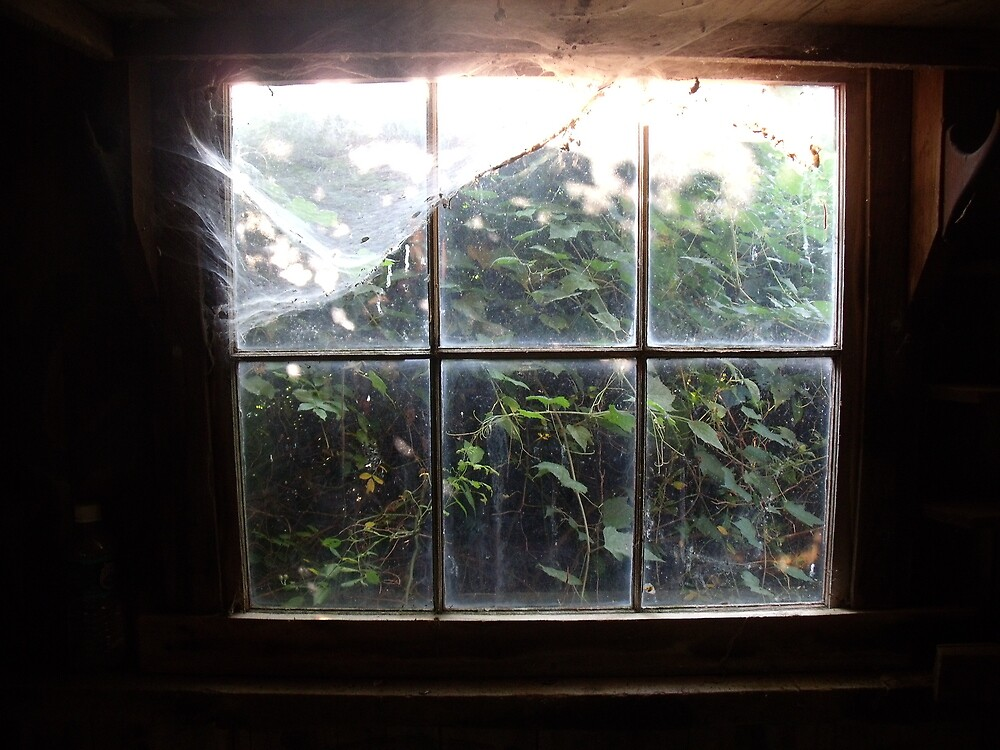 Window in an Old Shed by TJ Trubert