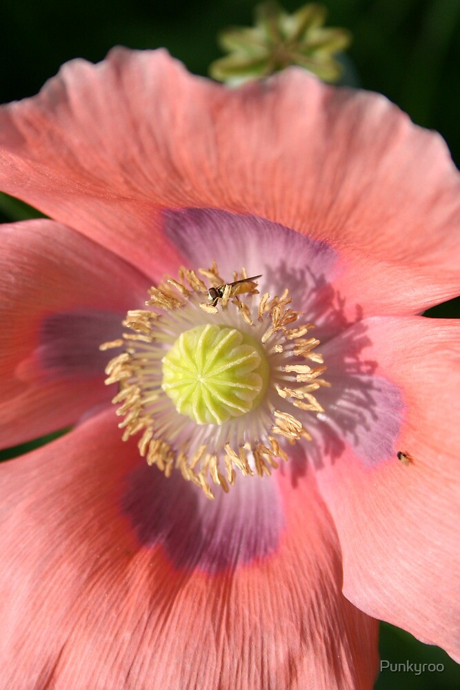 Pink Poppy by Punkyroo