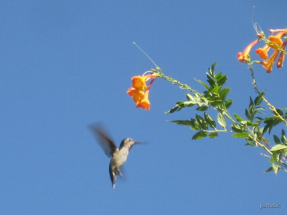Hummingbird by jsmusic
