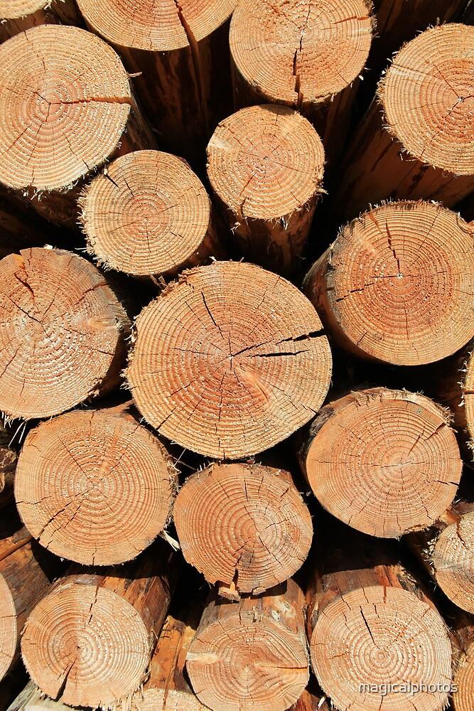 Logs by magicalphotos