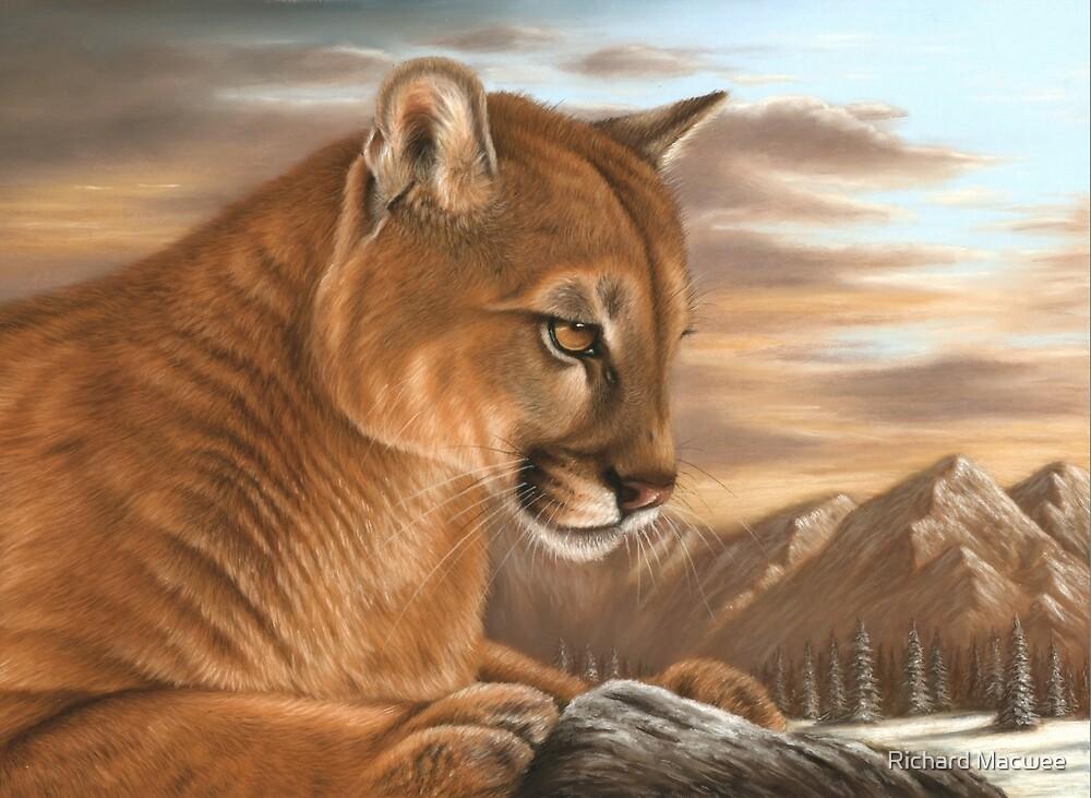 Mountain Lion by Richard Macwee