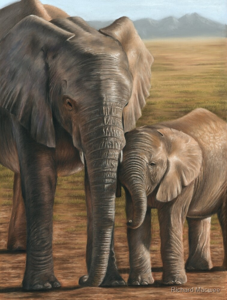 Elephant and Calf by Richard Macwee