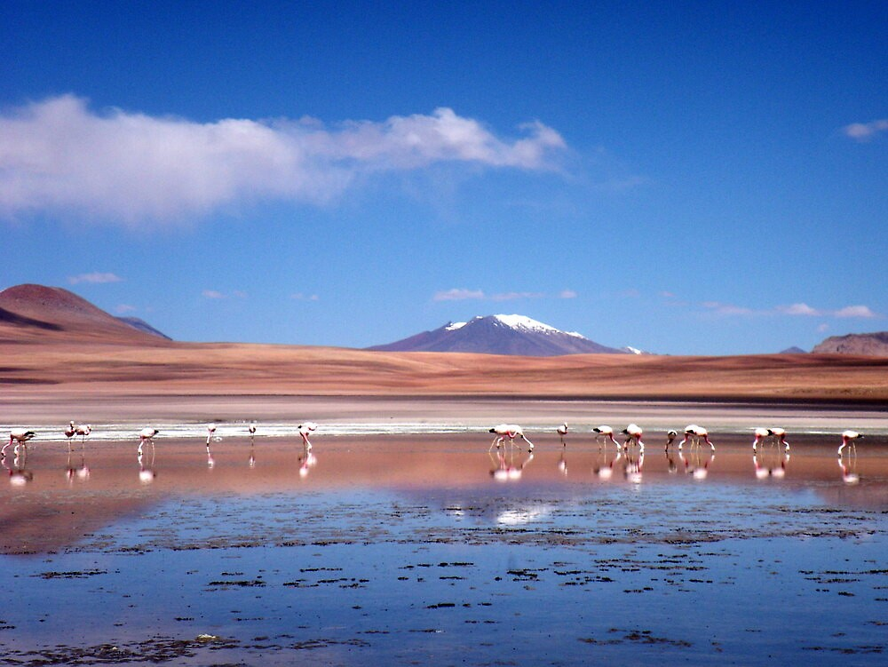 Bolivian Flamingos by Vonnstar