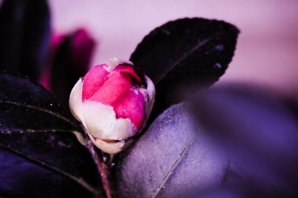 Beginning Bloom by h0neybebeh