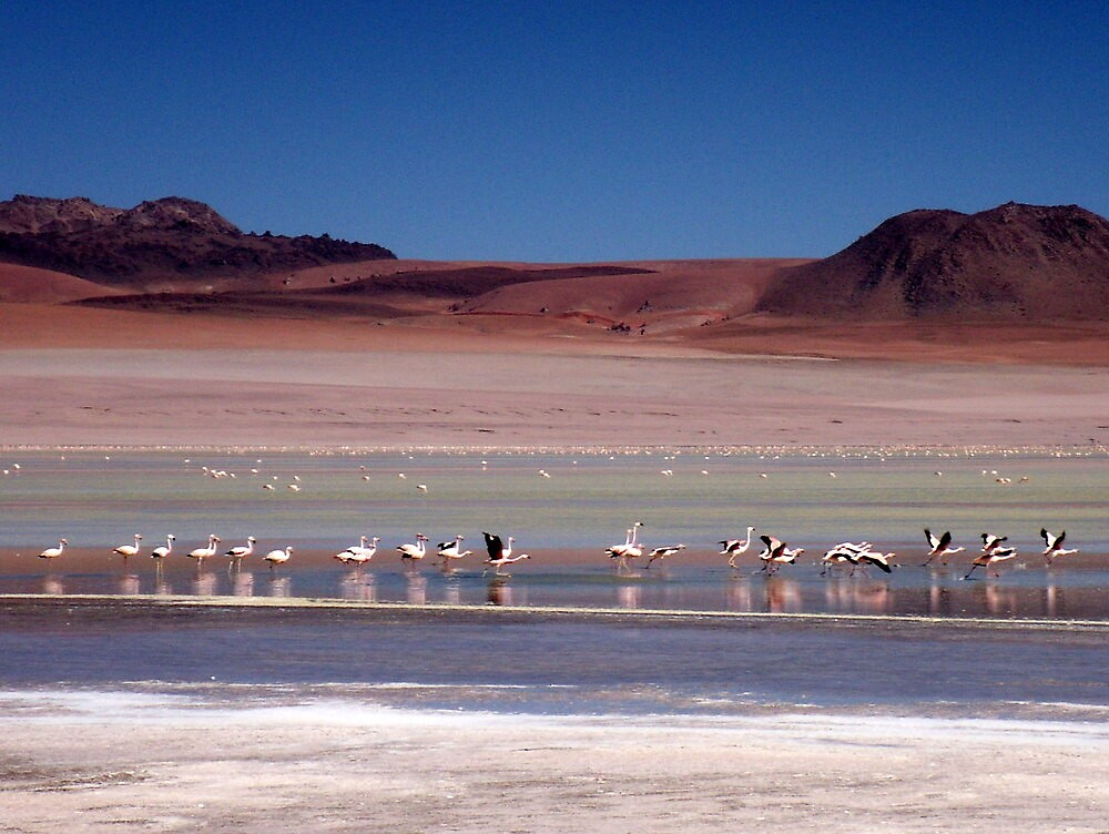 Flight of the Bolivian Flamingo by Vonnstar