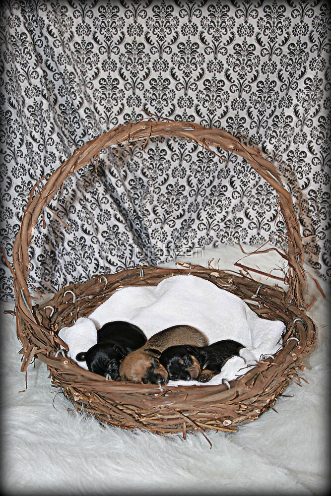 Chiweenie Babies by jujubean