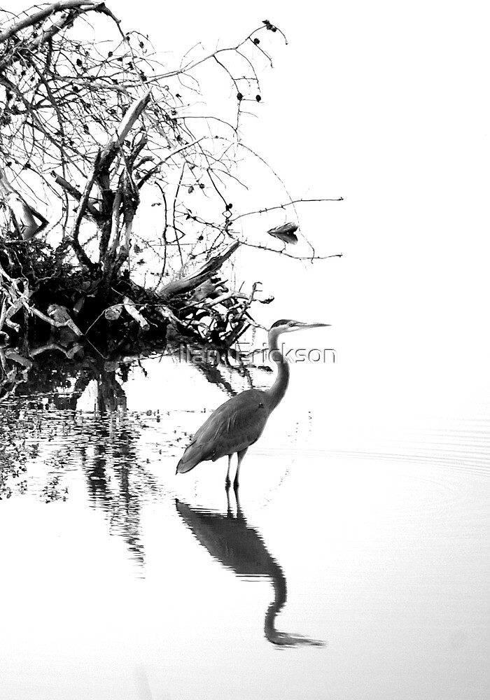 Heron in B&W by Allan  Erickson