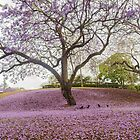purple rain  by warren dacey