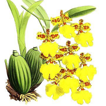 Orchidee of Rio de Janiero by YaelleDark