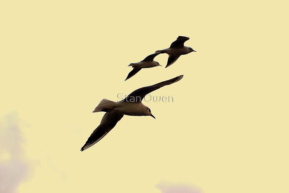 Freebirds by Stan Owen