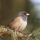 Sparrow by Ronda Sliter