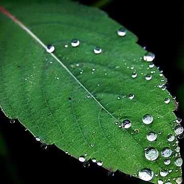 Rain drops on a leaf..Blood is thicker than water by jammingene