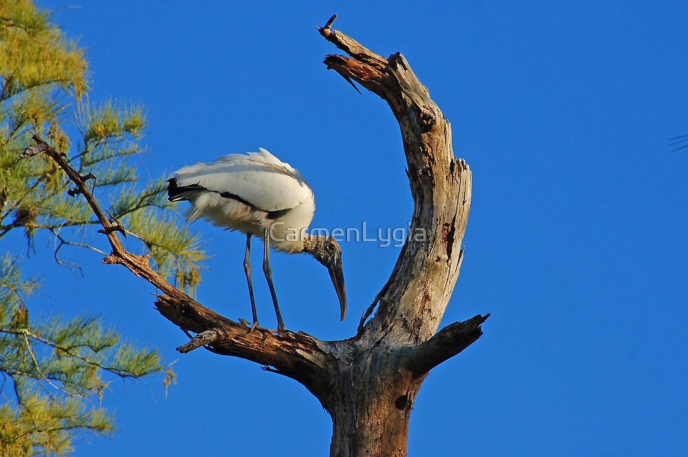 Heron Over the Tree by CarmenLygia