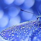 Butterfly Droplets by maf01