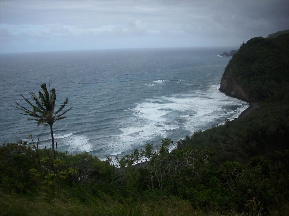 Coastal Tree by iwfralick