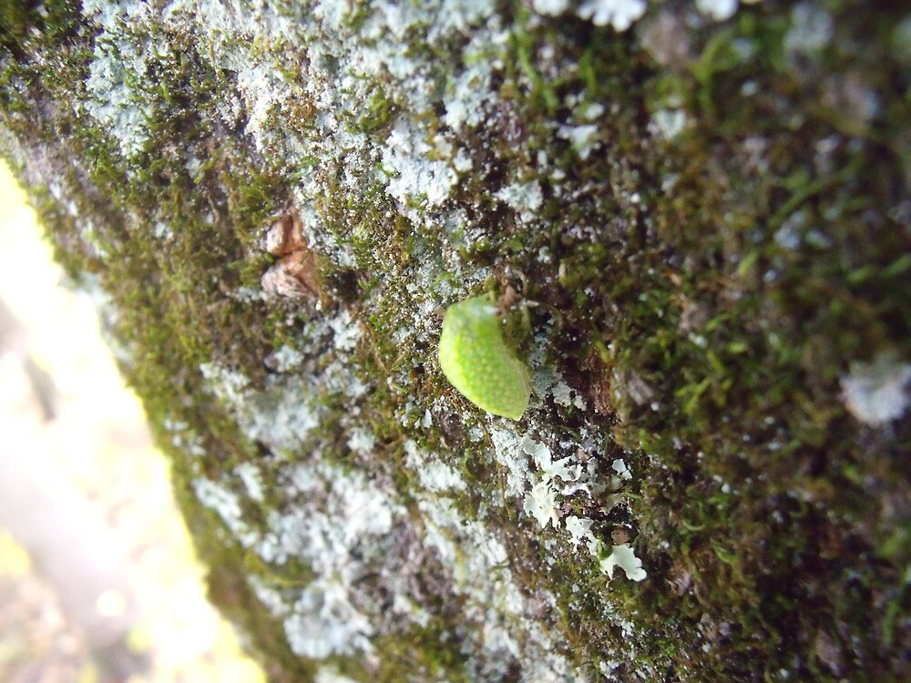 Bug on Bark by TJ Trubert
