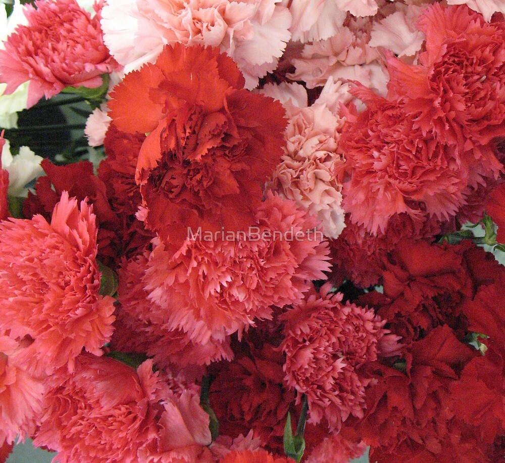 Carnations Anyone? by MarianBendeth