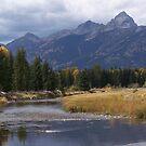Snake River by Ronda Sliter