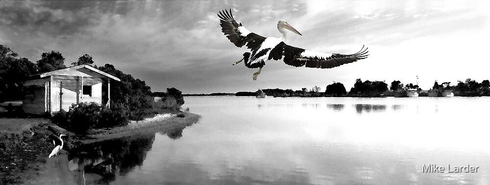 """""""Pelican Rising"""" Yamba. by Mike Larder"""