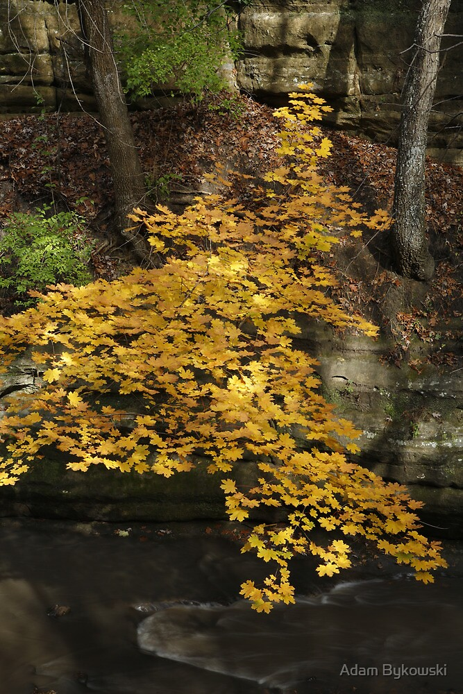 Maple Leaf Waterfall by Adam Bykowski