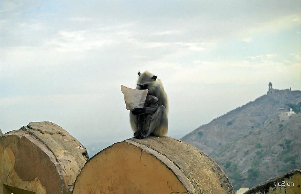 Monkey News by tlc2jon