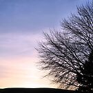 Winter SunSet by Ronda Sliter