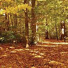 The Forest Floor in Fall by Jerald Simon (Music Motivation - musicmotivation.com) by jeraldsimon