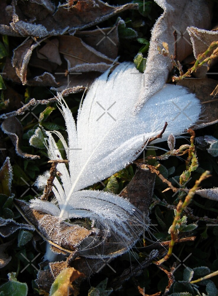 Frosty Morning Feather by angelandspot