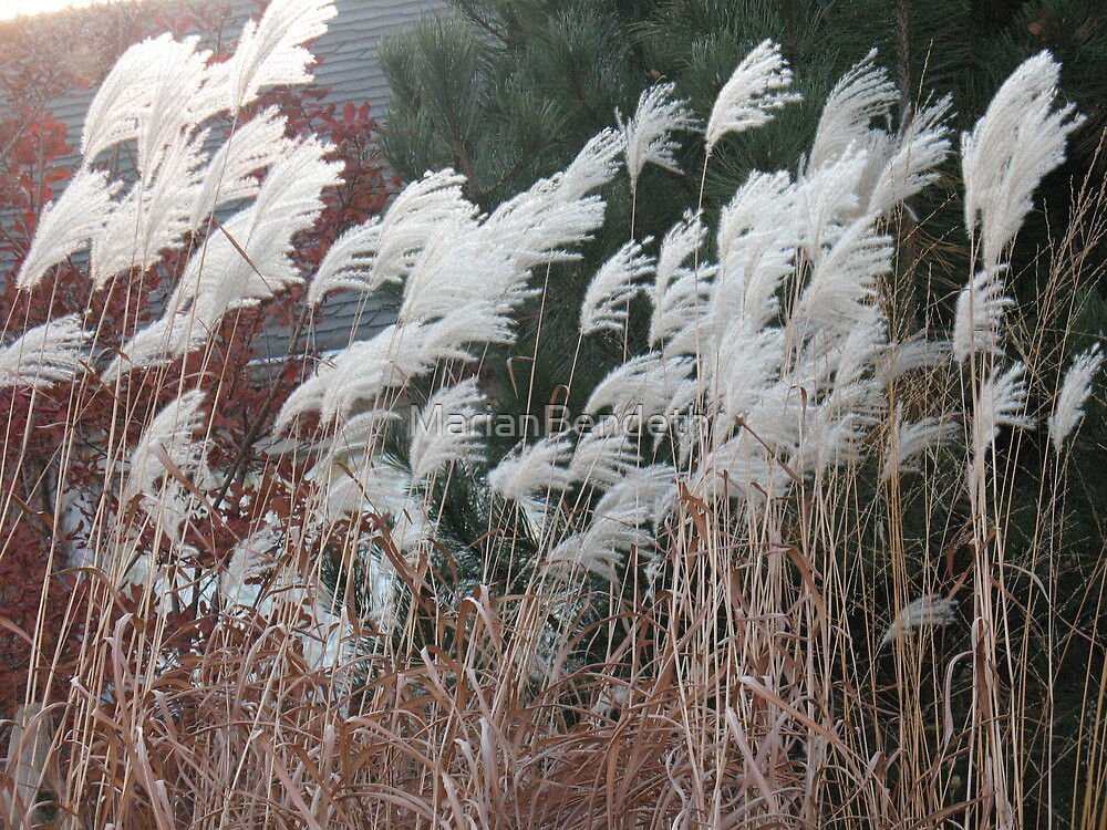 White Feather Reeds by MarianBendeth