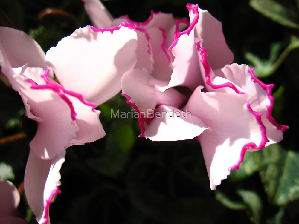 Hemmed in Pink Satine Flowers by MarianBendeth