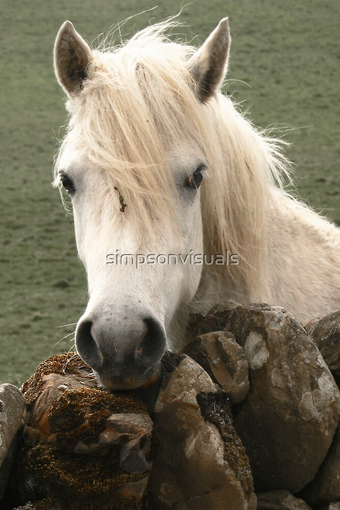 White Horse by simpsonvisuals