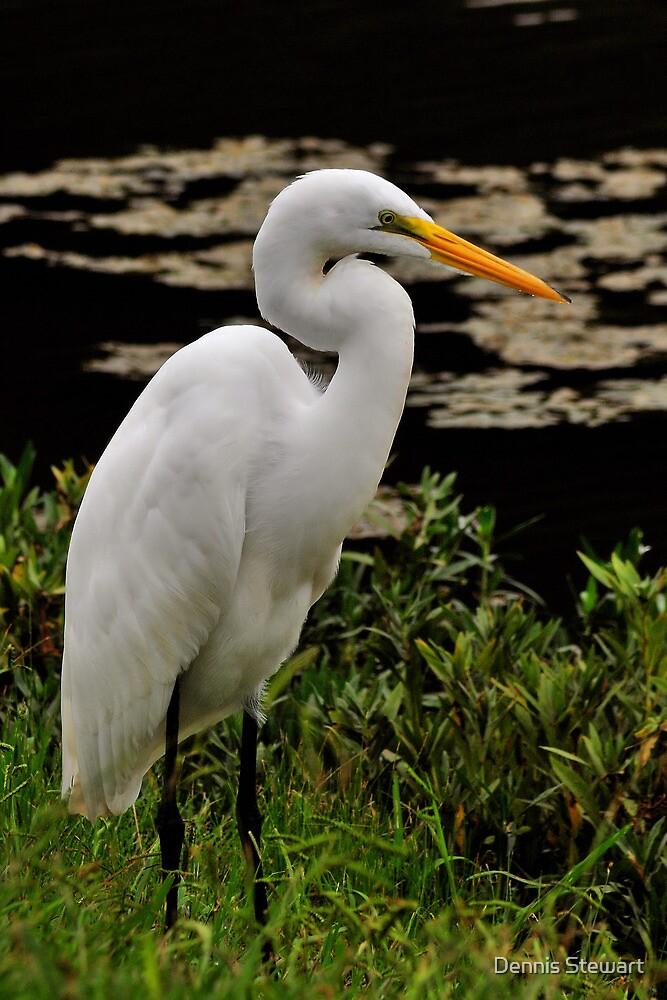 Great Egret by Dennis Stewart