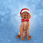 Drawing funny Vizsla pointer in red hat of Santa Claus  by bonidog