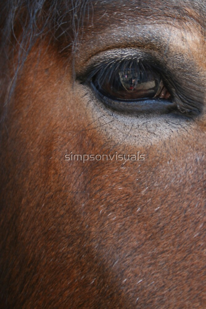Clydesdale Horse by simpsonvisuals