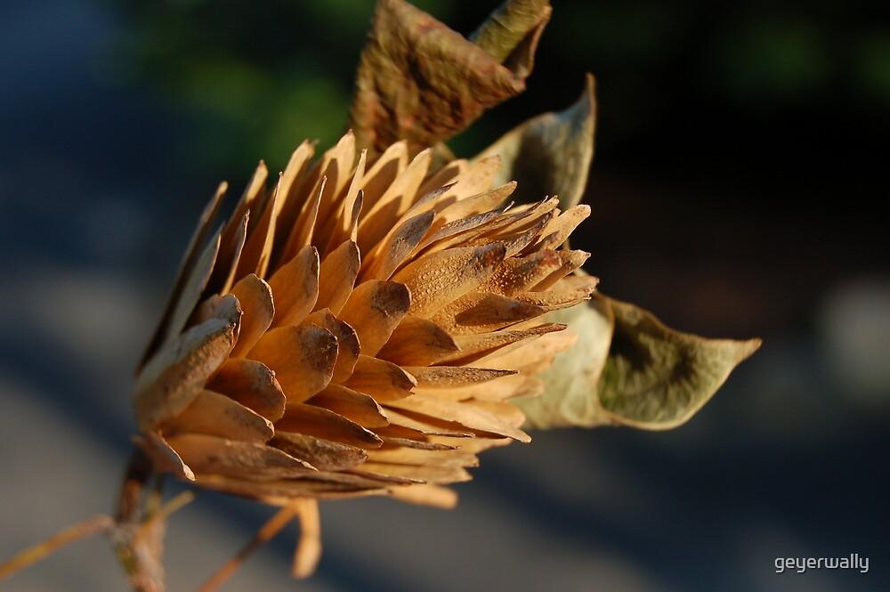 Tuliptree Flower in the Fall by geyerwally