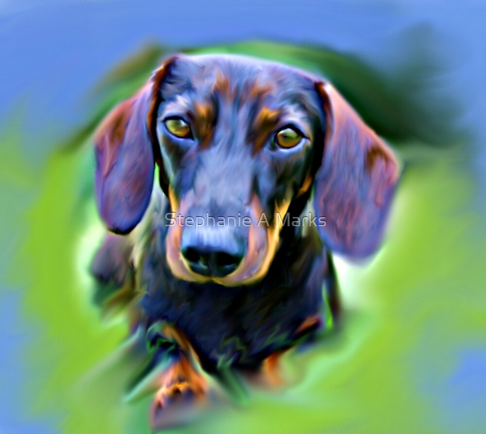 Colorful Dach by Stephanie A Marks