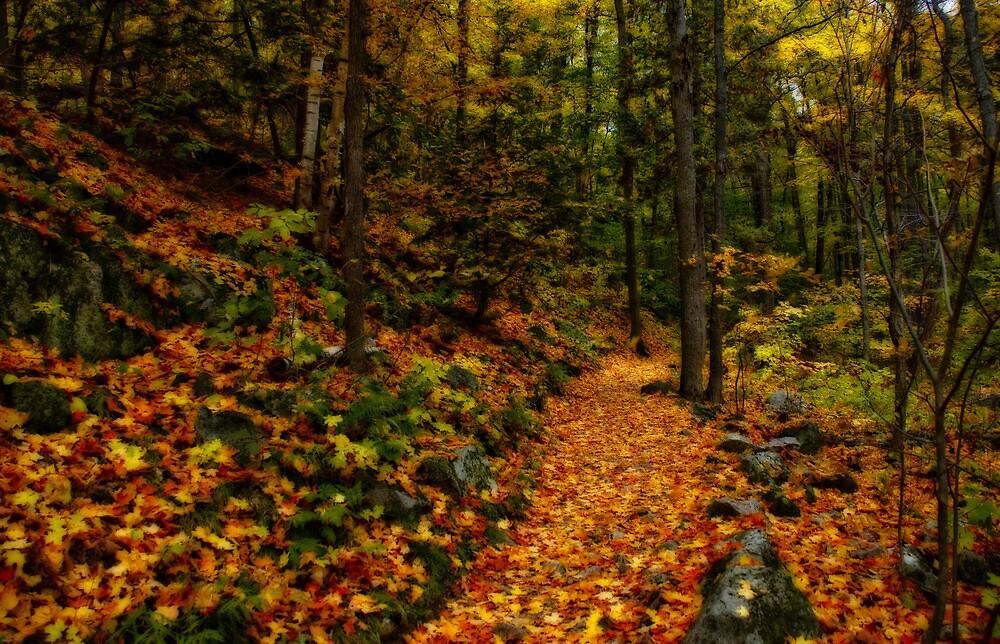 Autumn Path by Ragnorok