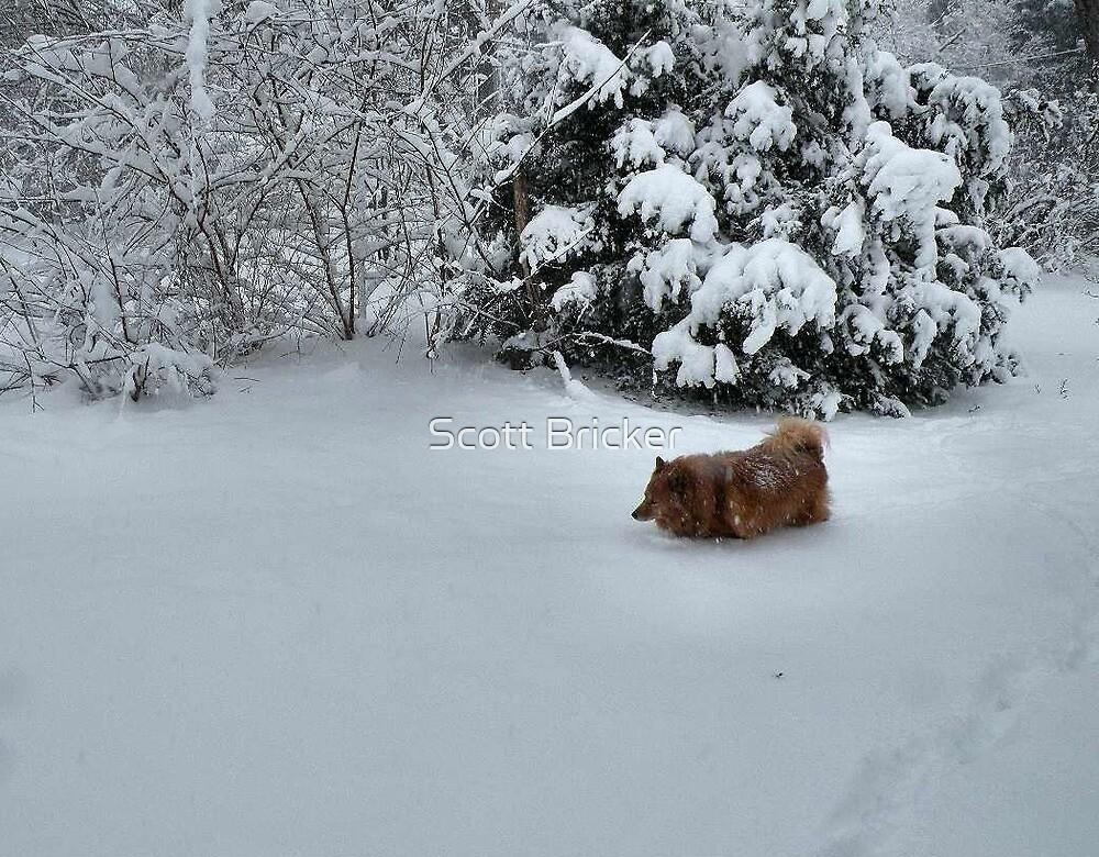 'SnowCindy 2' by Scott Bricker