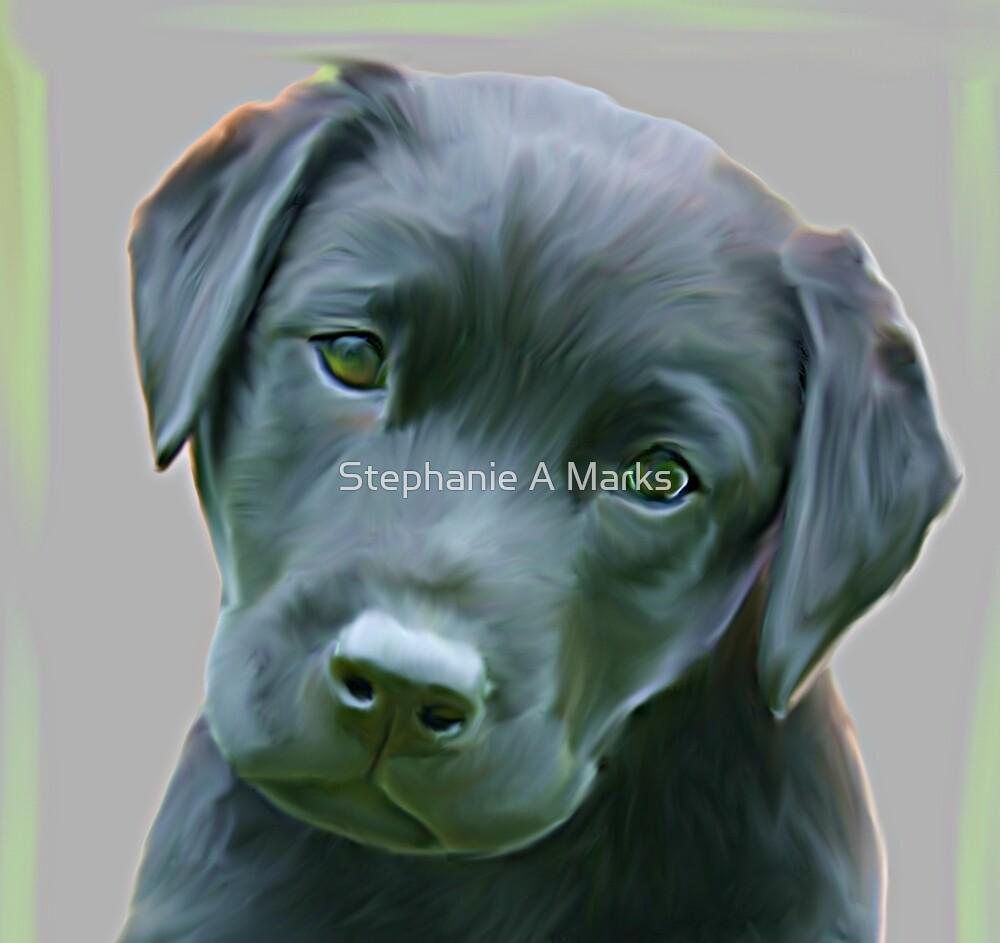 Black Labrador by Stephanie A Marks