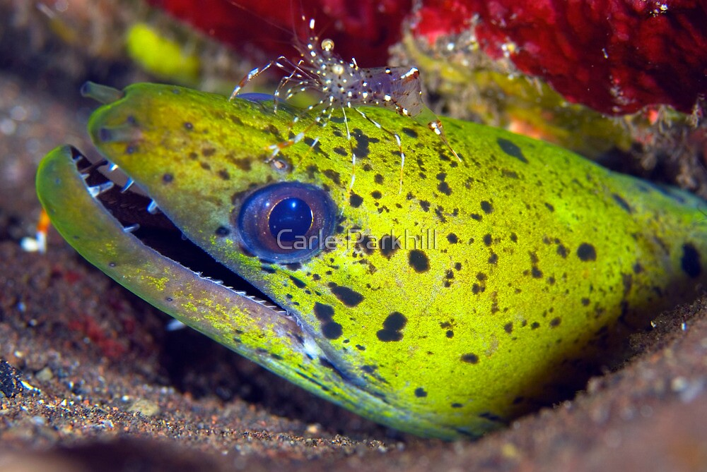 eels by Carle Parkhill