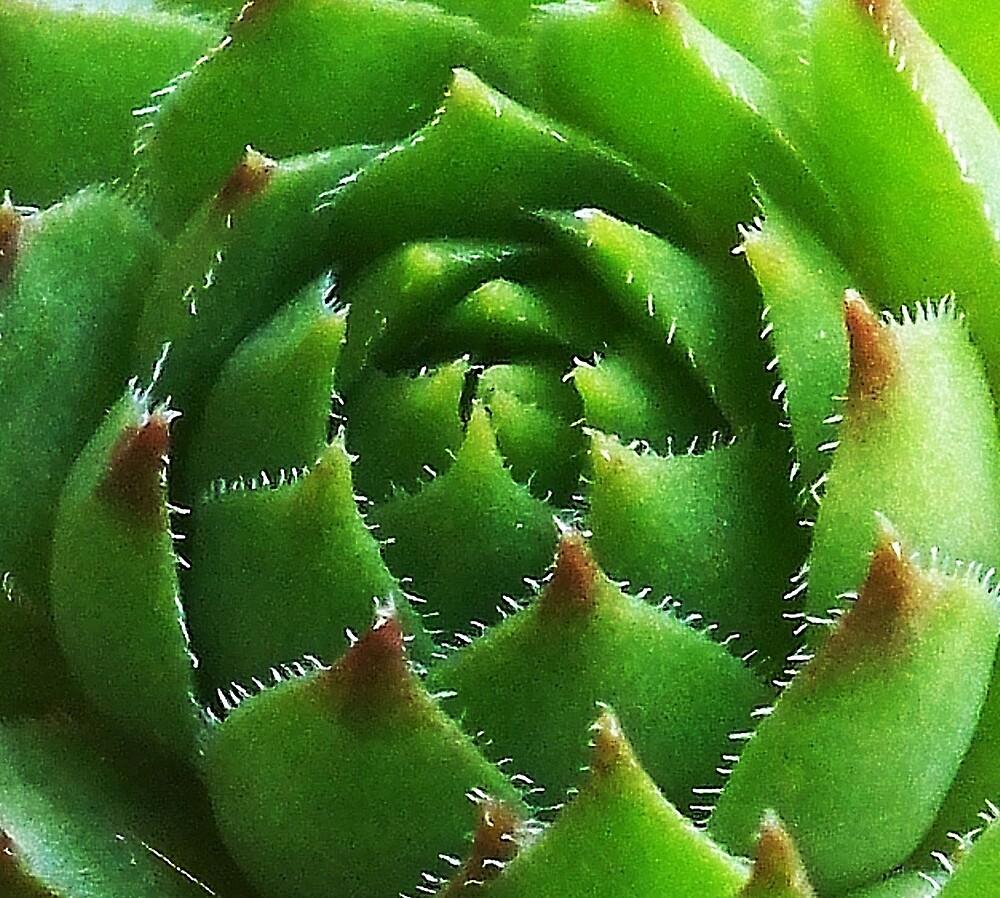 Succulent So Close by foxx0102