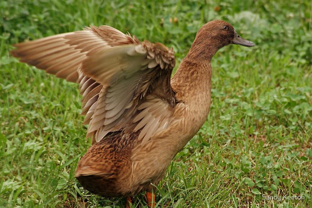 Winging It by Sandy Keeton