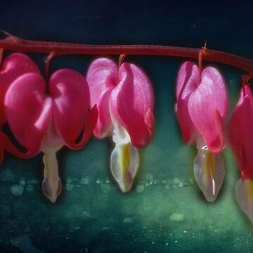 Bleeding Hearts by Photograph2u