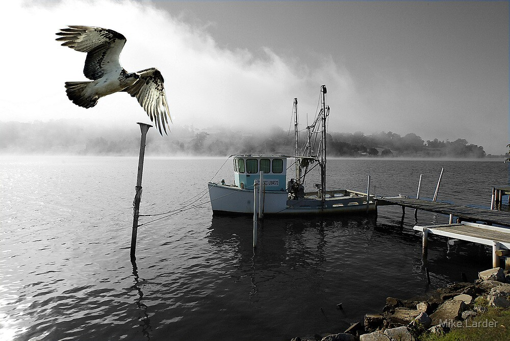 """""""Osprey Trawling"""" Clarence River. NSW by Mike Larder"""